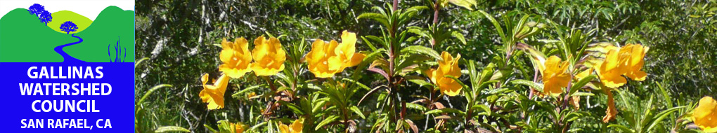 sticky_monkey_flower