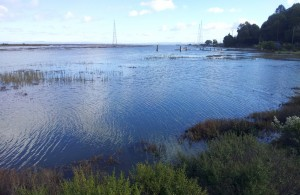 Mouth of Gallinas Creek 300x195 King Tide Hikes 2014