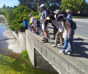 Entering Gallinas Creek Ditch in Terra Linda for Earth Day Hike and Cleanup