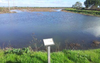 American Wetlands Month
