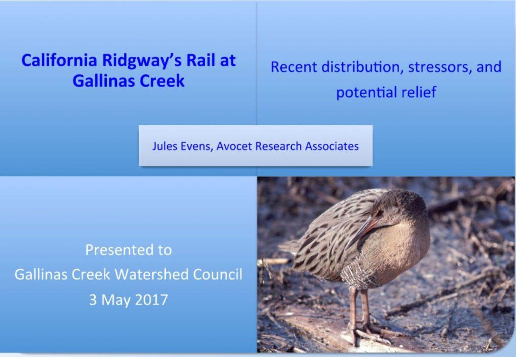 Jules Evens Ridgeway's Rail talk