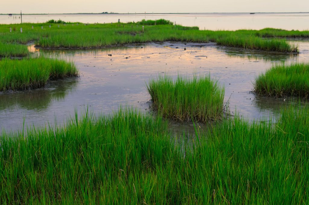 American Wetlands Month