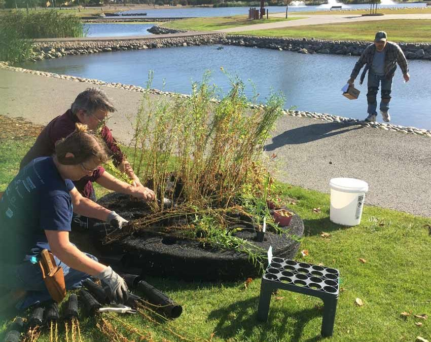 New Floating Island Biofilter launched at Marin Civic Center Lagoon