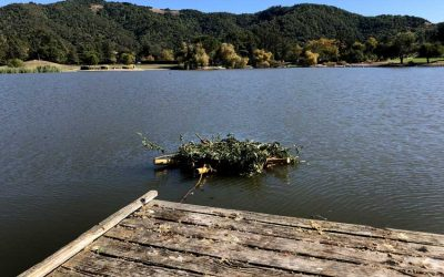Biological Floating Island Biofilter Launched in Marin Civic Center Lagoon